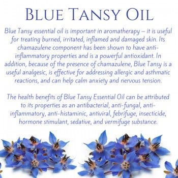 Benefits of Blue Tansy Oil