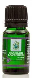 Kashmir Lavender