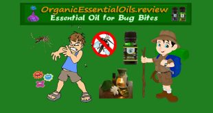 essential oils for bug bites itching