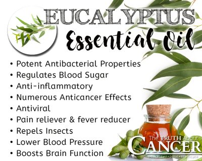 eucalyptus essential oil benefits