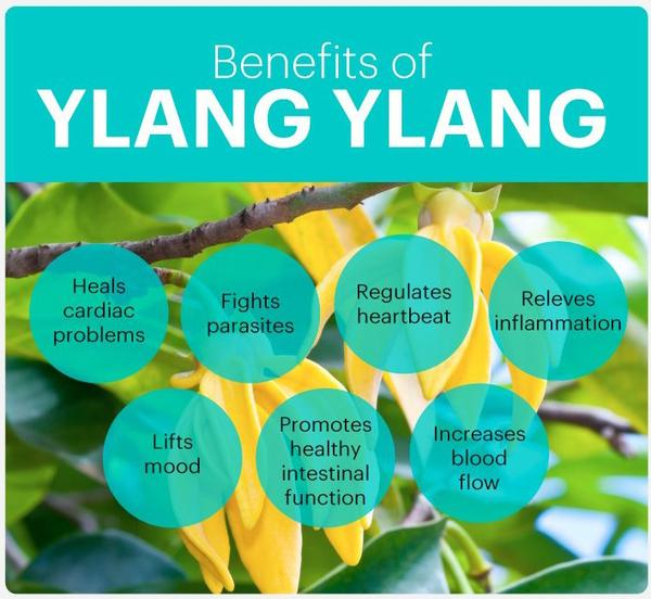 Ylang Ylang Essential Oil Benefits