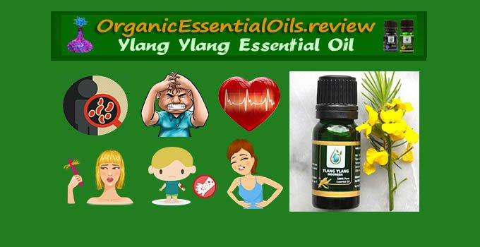 organic ylang ylang essential oil